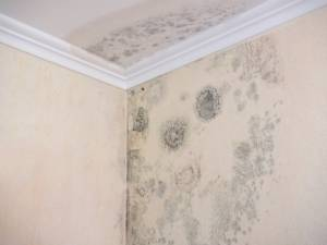 what to do if home inspector finds mold