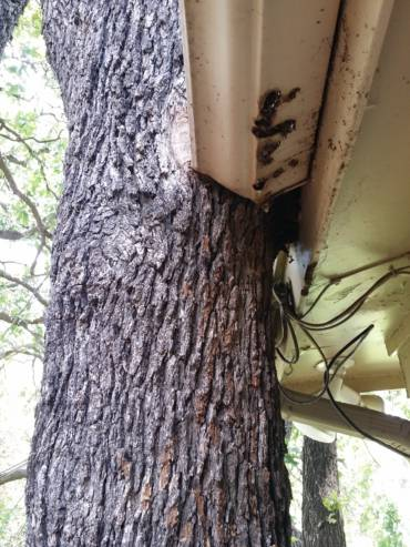 Roof Inspections During Home Inspections – You Won't Believe What We Found