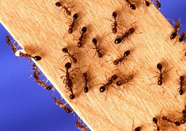Ant Inspection