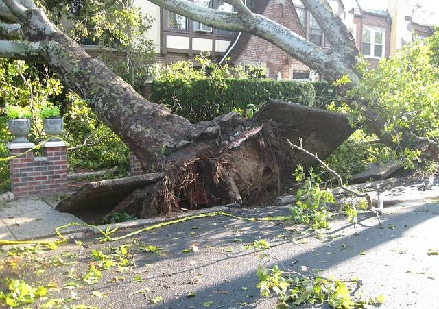 Tree Damage After a Storm